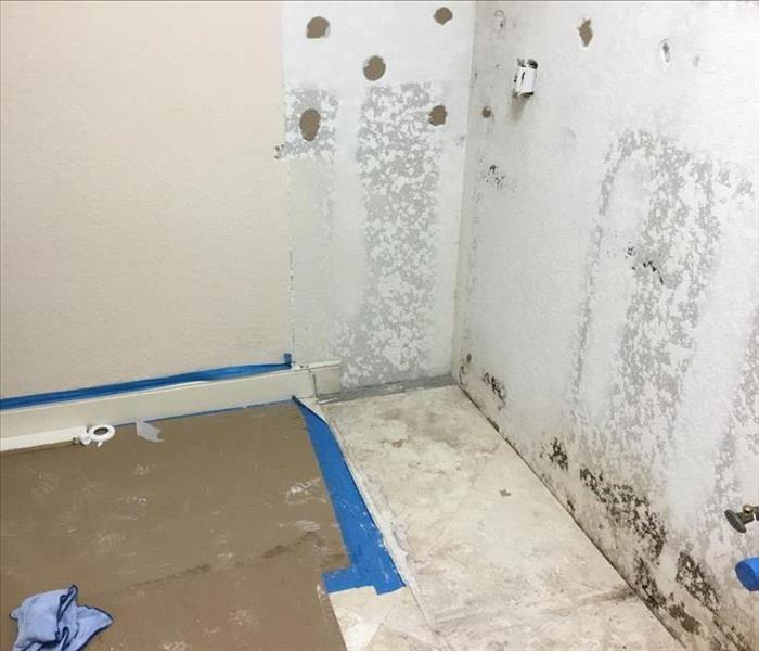 Mold growth caused by excess moisture and humidity