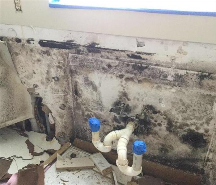 Mold Growth in Kitchen of Family Home in Boca Raton Before